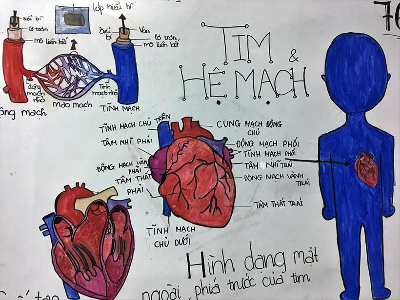 Tim va he mach 7 Tim và hệ mạch – chuyên đề tích hợp ấn tượng
