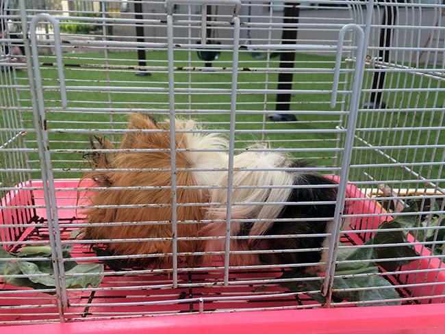Boi duong tinh yeu thuong dong vat 1.3 Bồi dưỡng tình yêu thương loài vật cho trẻ