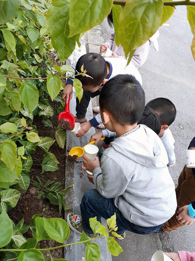 """The gioi thuc vat 12 Các bé lớp Kangaroo với chủ điểm """"Thế giới thực vật"""""""