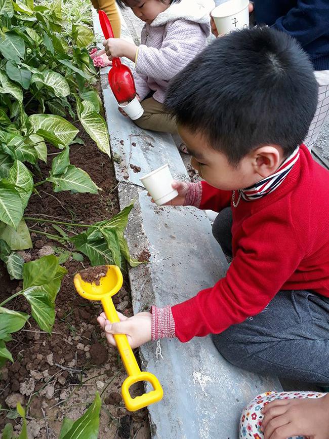 """The gioi thuc vat 14 Các bé lớp Kangaroo với chủ điểm """"Thế giới thực vật"""""""