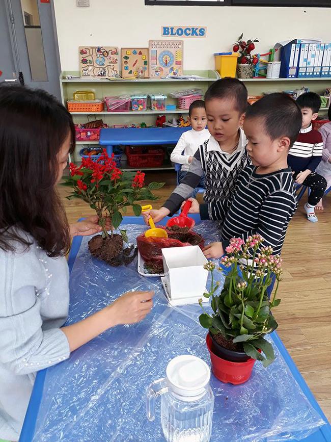 """The gioi thuc vat 7 Các bé lớp Kangaroo với chủ điểm """"Thế giới thực vật"""""""