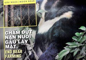 Hãy cứu gấu thoát khỏi sự tàn bạo!!!