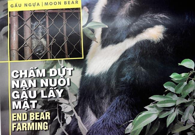 hãy cứu gấu thoát khỏi sự tàn bạo!!! Hãy cứu gấu thoát khỏi sự tàn bạo!!!