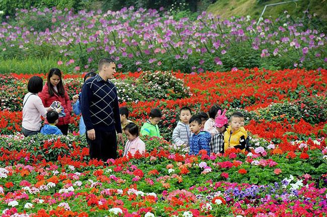 """Chuyen tham quan thung lung hoa 13 Chuyến thăm quan:"""" Thung lũng hoa Hồ Tây"""" của các bé khối mầm non"""