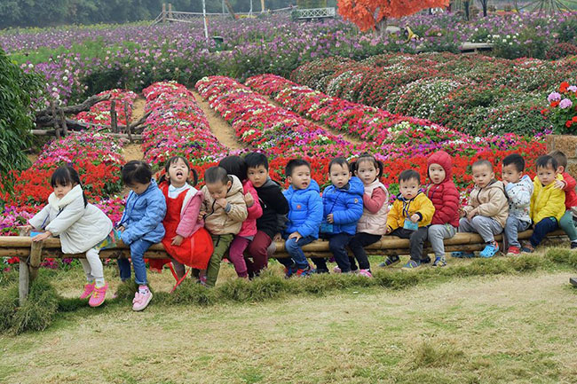 """Chuyen tham quan thung lung hoa 14 Chuyến thăm quan:"""" Thung lũng hoa Hồ Tây"""" của các bé khối mầm non"""