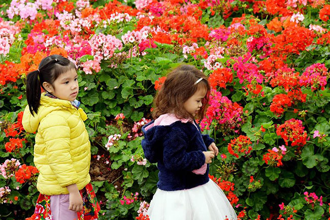 """Chuyen tham quan thung lung hoa 4 Chuyến thăm quan:"""" Thung lũng hoa Hồ Tây"""" của các bé khối mầm non"""