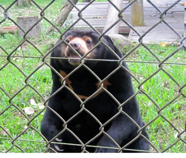 Chuyến tham quan trại gấu thú vị