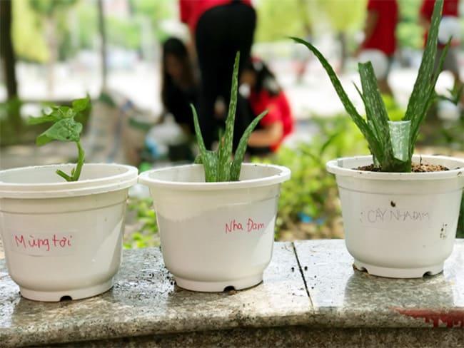 CLB Khoa học: Vườn thuốc quý trong sân trường