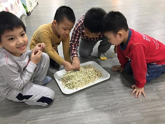 """Trường Mầm non Hanoi Academy - Phương pháp dạy học theo dự án với chủ đề """"Sự nảy mầm của hạt"""" Trường Mầm non Hanoi Academy – Phương pháp dạy học theo dự án với chủ đề """"Sự nảy mầm của hạt"""""""