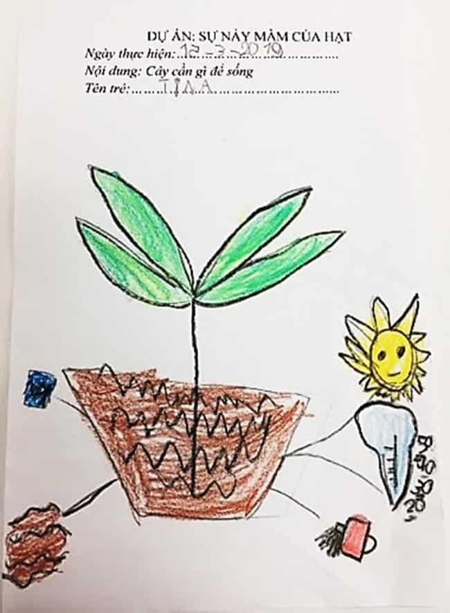 """Trường Mầm non Hanoi Academy – Phương pháp dạy học theo dự án với chủ đề """"Sự nảy mầm của hạt"""""""