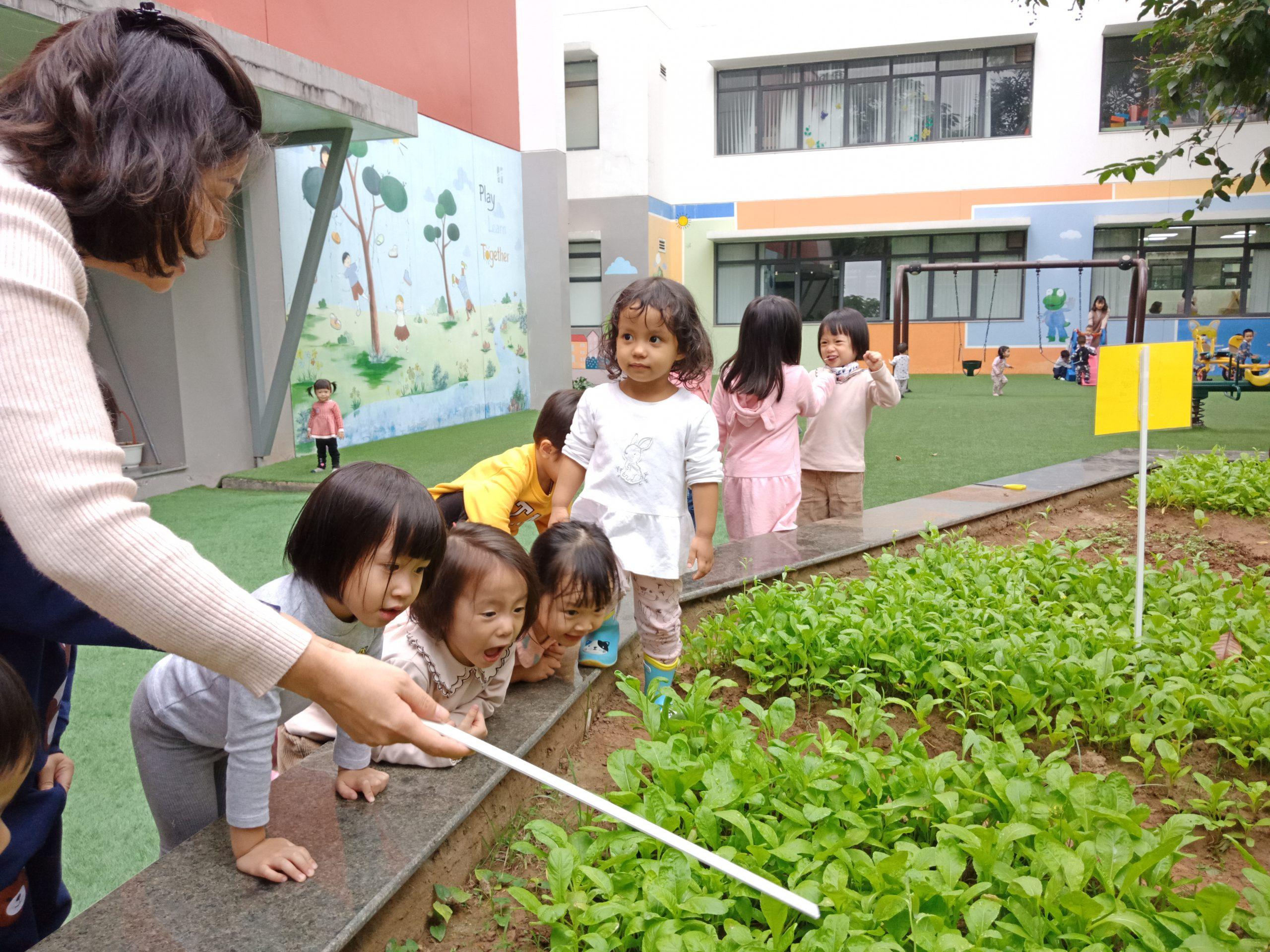 Hoạt động trồng rau sạch của các bạn nhỏ mẫu giáo bé khối Mầm non Trang chủ